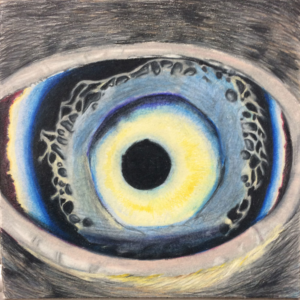 eye drawing  colored pencils  art lesson