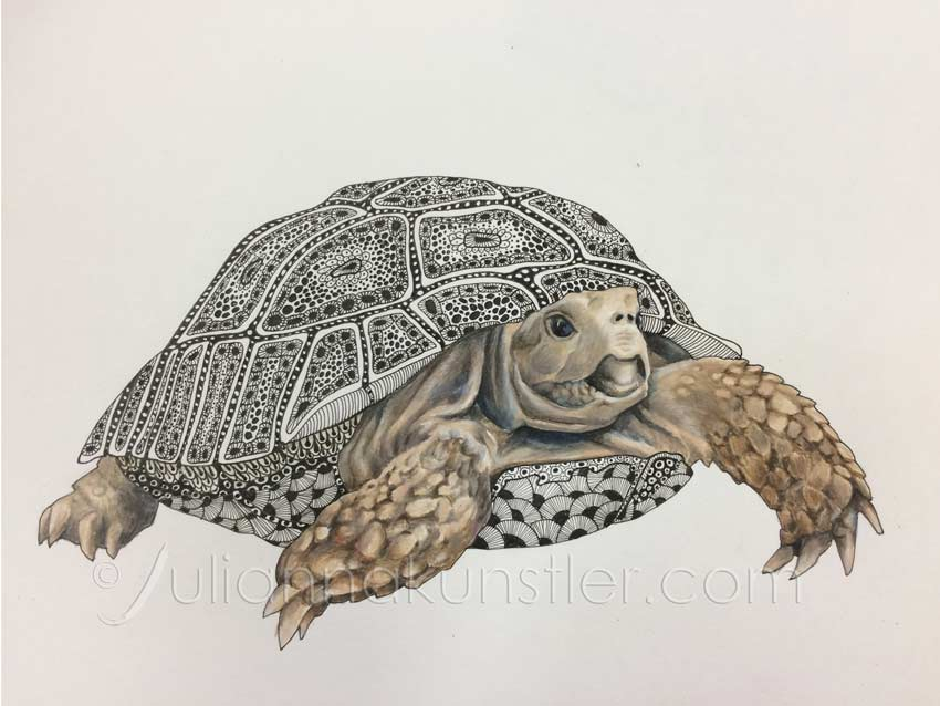 turtle with patterns